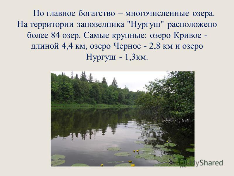 Но главное богатство – многочисленные озера. На территории заповедника Нургуш расположено более 84 озер. Самые крупные: озеро Кривое - длиной 4,4 км, озеро Черное - 2,8 км и озеро Нургуш - 1,3 км.