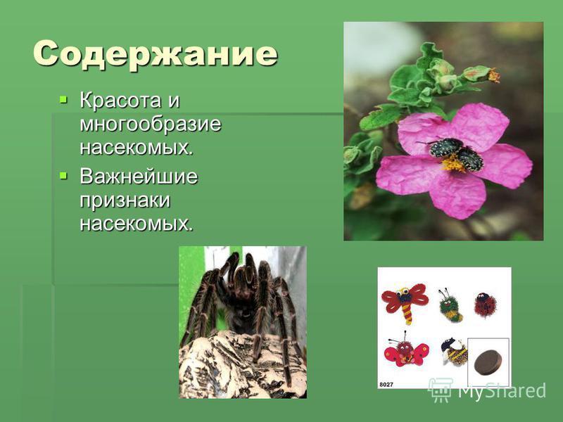 Содержание Красота и многообразие насекомых. Важнейшие признаки насекомых.