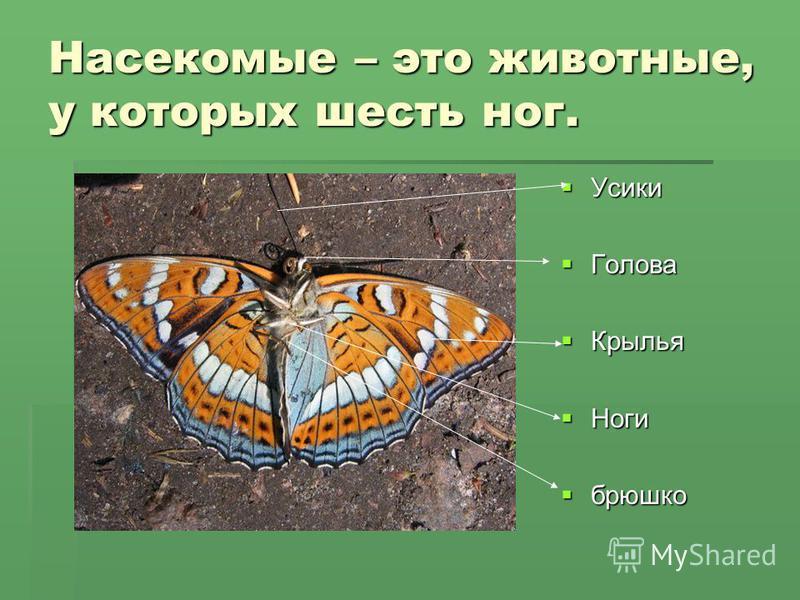 Насекомые – это животные, у которых шесть ног. Усики Усики Голова Голова Крылья Крылья Ноги Ноги брюшко брюшко