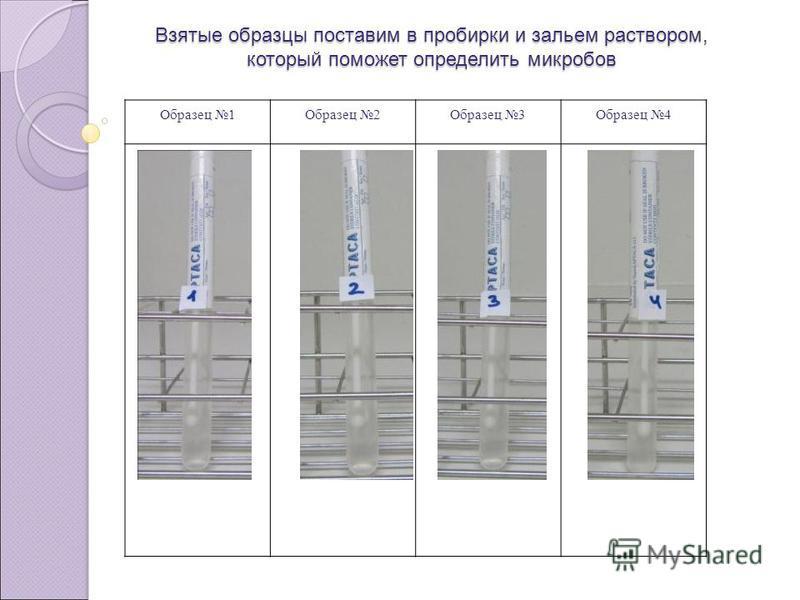 Взятые образцы поставим в пробирки и зальем раствором, который поможет определить микробов Образец 1Образец 2Образец 3Образец 4