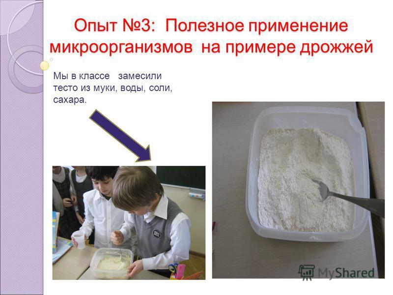 Опыт 3: Полезное применение микроорганизмов на примере дрожжей Мы в классе замесили тесто из муки, воды, соли, сахара.