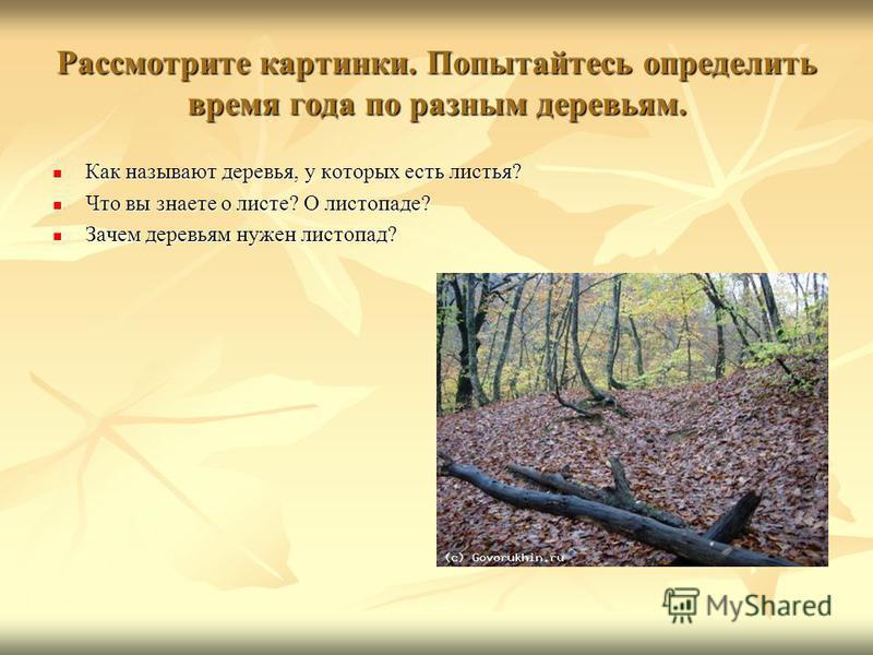Рассмотрите картинки. Попытайтесь определить время года по разным деревьям. Как называют деревья, у которых есть листья? Как называют деревья, у которых есть листья? Что вы знаете о листе? О листопаде? Что вы знаете о листе? О листопаде? Зачем деревь