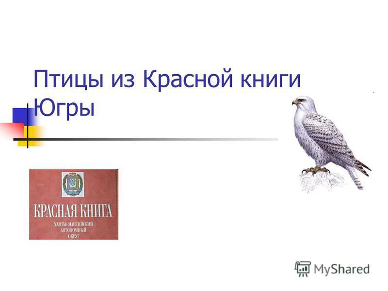 Птицы из Красной книги Югры