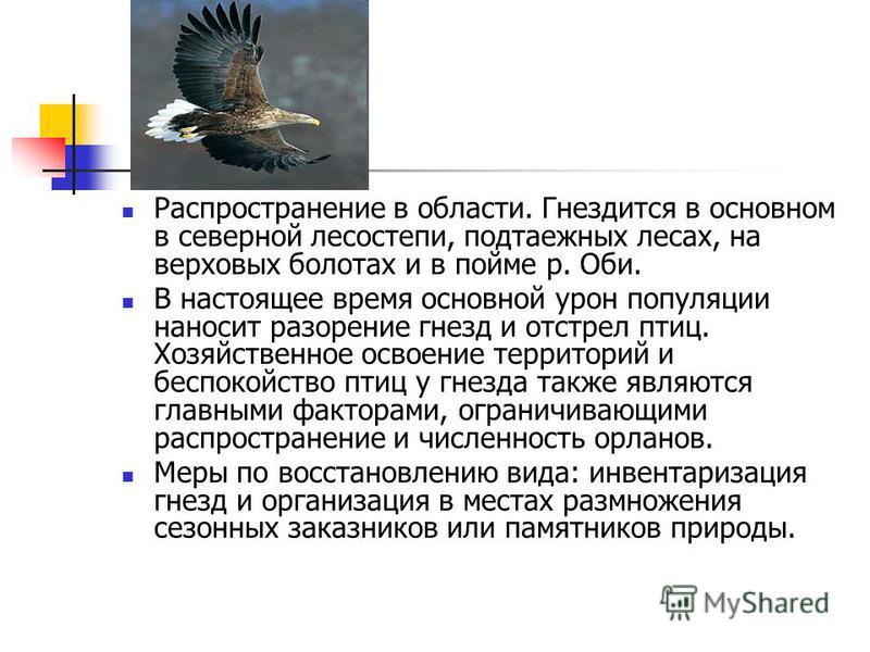 В настоящее время основной урон популяции наносит разорение гнезд и отстрел птиц. Хозяйственное освоение территорий и беспокойство птиц у гнезда также являются главными факторами, ограничивающими распространение и численность орланов. Меры по восстан