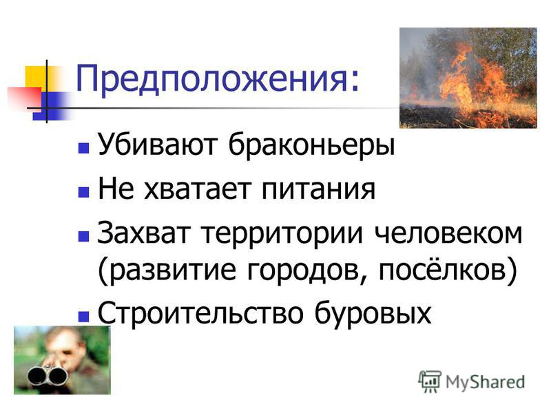 Предположения: Убивают браконьеры Не хватает питания Захват территории человеком (развитие городов, посёлков) Строительство буровых