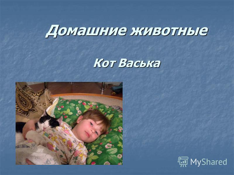 Домашние животные Кот Васька