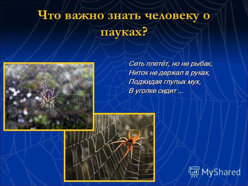 Что важно знать человеку о пауках? Сеть плетёт, но не рыбак, Ниток не держал в руках, Поджидая глупых мух, В уголке сидит...