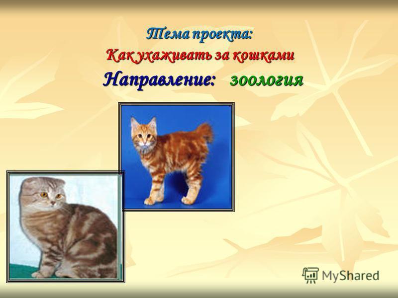 Тема проекта: Как ухаживать за кошками Направление: зоология