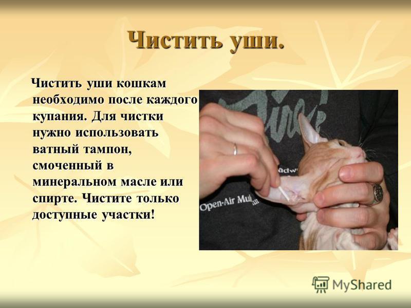 Чистить уши. Чистить уши кошкам необходимо после каждого купания. Для чистки нужно использовать ватный тампон, смоченный в минеральном масле или спирте. Чистите только доступные участки! Чистить уши кошкам необходимо после каждого купания. Для чистки