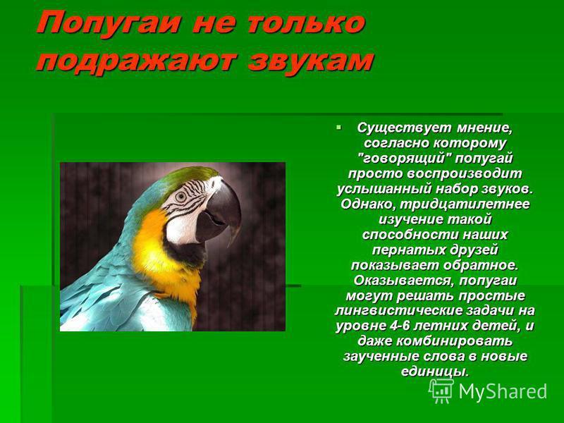 Попугаи не только подражают звукам Существует мнение, согласно которому