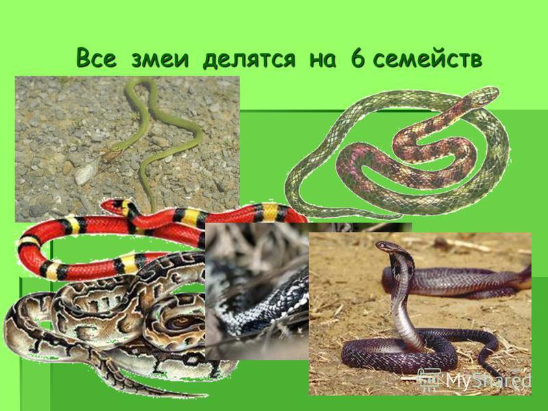 Все змеи делятся на 6 семейств
