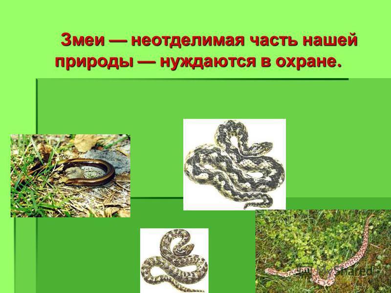 Змеи неотделимая часть нашей природы нуждаются в охране. Змеи неотделимая часть нашей природы нуждаются в охране.