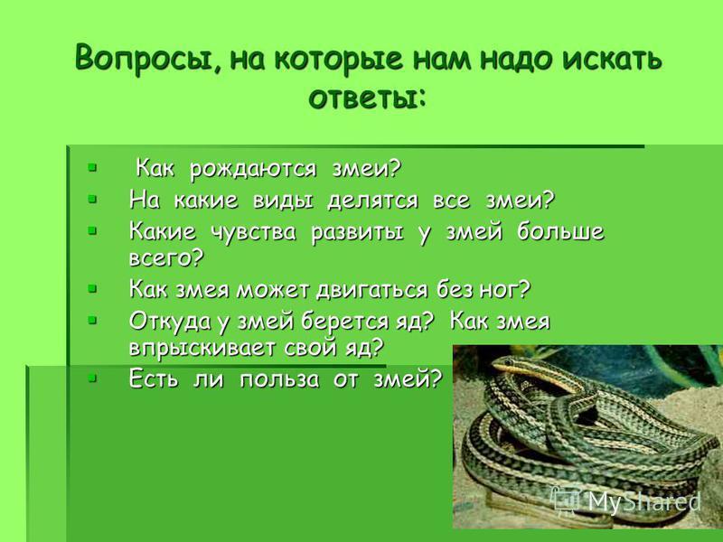 Вопросы, на которые нам надо искать ответы: Как рождаются змеи? Как рождаются змеи? На какие виды делятся все змеи? На какие виды делятся все змеи? Какие чувства развиты у змей больше всего? Какие чувства развиты у змей больше всего? Как змея может д