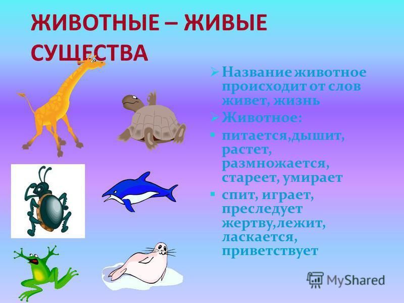 ЖИВОТНЫЕ - ЧАСТЬ ПРИРОДЫ Лисица ( звери) Синица ( птицы) Шмель ( насекомые) Лягушка (земноводные) Крокодил ( пресмыкающиеся) Акула ( Рыбы)