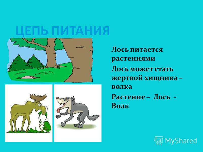 ПРО ЗВЕРЕЙ – ЭТО ИНТЕРЕСНО! Травоядные ( олени, антилопы, куланы, верблюды) Хищные ( тигр, гиена, волк, лев, гепард, леопард) Грызуны ( тушканчики,суслики, хомяки) Подземные ( крот) Водные ( кит, бобр, нутрия, тюлени) Летающие – ( летучие мыши)
