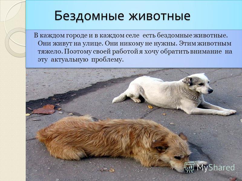 Животные в городе