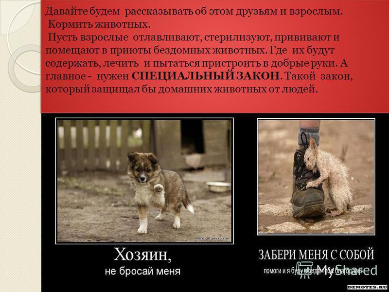 Решить проблему бездомных животных без вмешательства государства невозможно. Но смотреть и ничего не делать тоже нельзя!