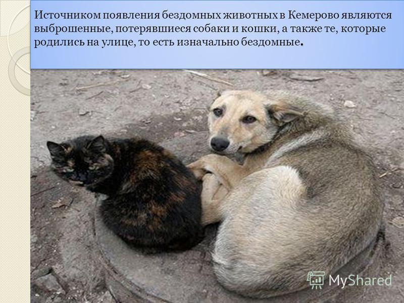 Бездомные животные Бездомные животные В каждом городе и в каждом селе есть бездомные животные. Они живут на улице. Они никому не нужны. Этим животным тяжело. Поэтому своей работой я хочу обратить внимание на эту актуальную проблему.