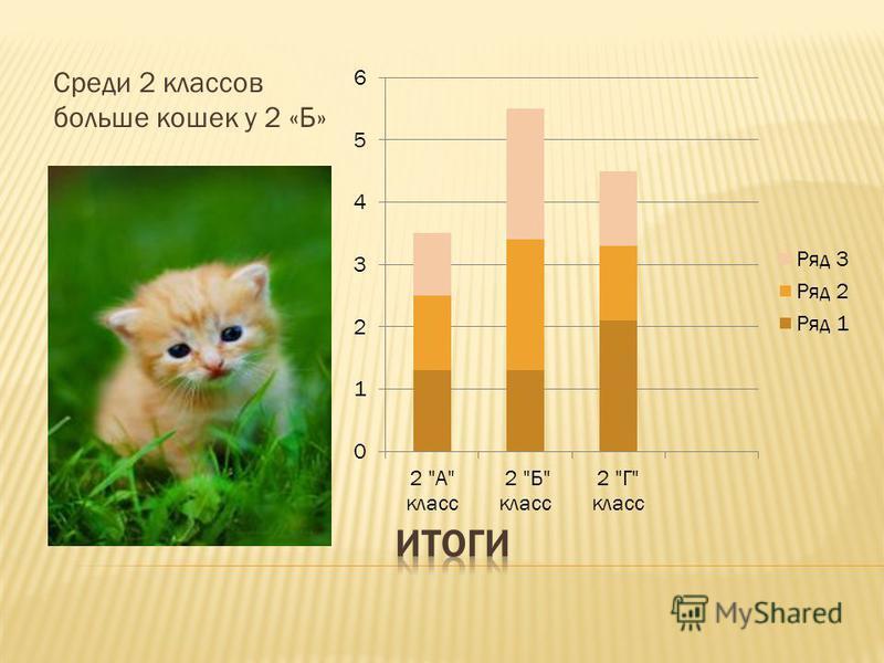 Среди 2 классов больше кошек у 2 «Б»