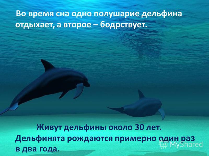 Во время сна одно полушарие дельфина отдыхает, а второе – бодрствует. Живут дельфины около 30 лет. Дельфинята рождаются примерно один ра з в два года.