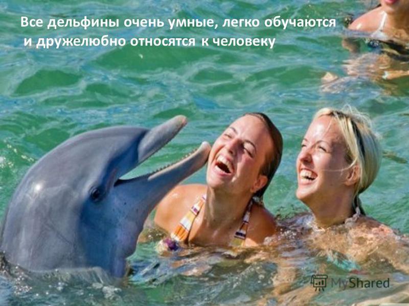 Все дельфины очень умные, легко обучаются и дружелюбно относятся к человеку