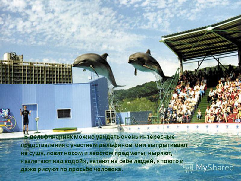 В дельфинариях можно увидеть очень интересные представления с участием дельфинов: они выпрыгивают на сушу, ловят носом и хвостом предметы, ныряют, «взлетают над водой», катают на себе людей, «поют» и даже рисуют по просьбе человека.
