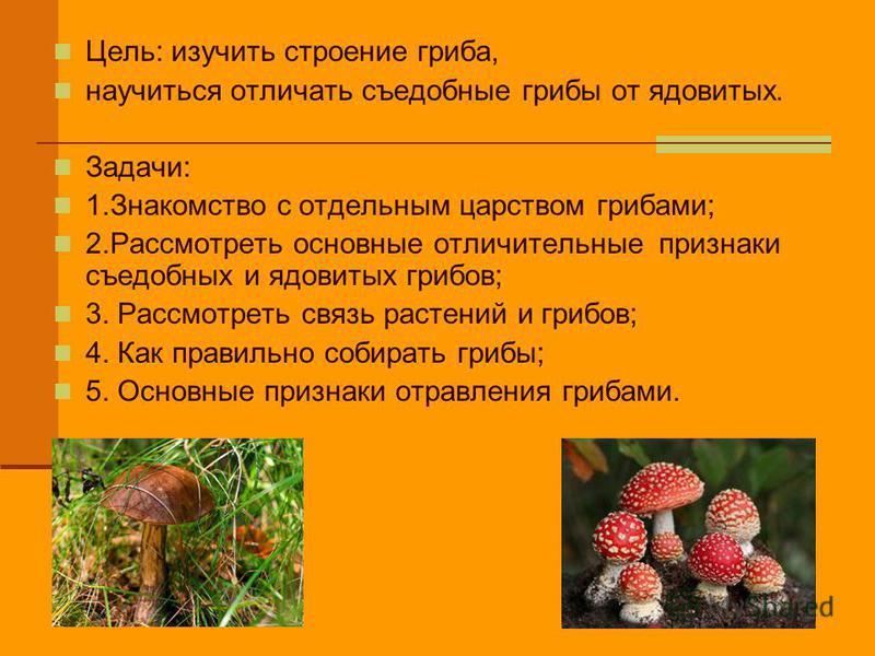 Цель: изучить строение гриба, научиться отличать съедобные грибы от ядовитых. Задачи: 1. Знакомство с отдельным царством грибами; 2. Рассмотреть основные отличительные признаки съедобных и ядовитых грибов; 3. Рассмотреть связь растений и грибов; 4. К