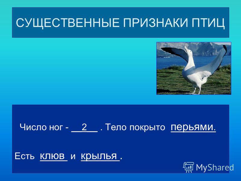 СУЩЕСТВЕННЫЕ ПРИЗНАКИ ПТИЦ Число ног - __2__. Тело покрыто перьями. Есть клюв и крылья.