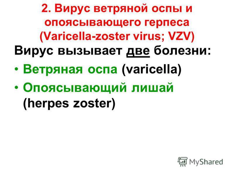 2. Вирус ветряной оспы и опоясывающего герпеса (Varicella-zoster virus; VZV) Вирус вызывает две болезни: Ветряная оспа (varicella) Опоясывающий лишай (herpes zoster)