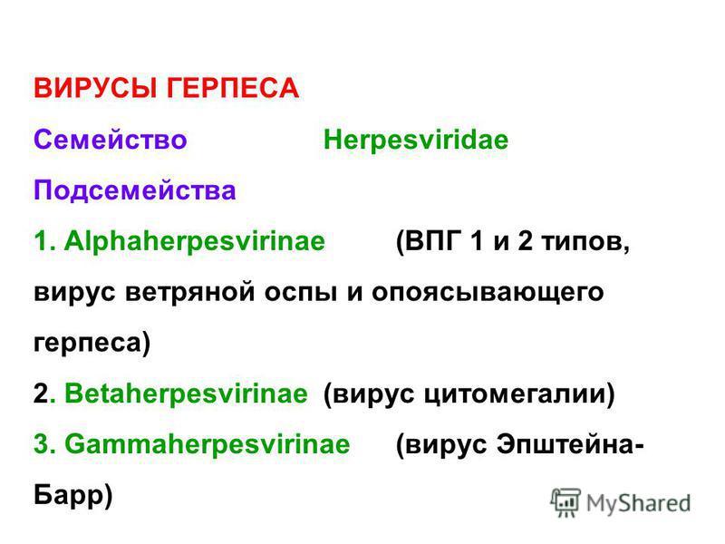 ВИРУСЫ ГЕРПЕСА СемействоHerpesviridae Подсемейства 1. Alphaherpesvirinae (ВПГ 1 и 2 типов, вирус ветряной оспы и опоясывающего герпеса) 2. Betaherpesvirinae(вирус цитомегалии) 3. Gammaherpesvirinae(вирус Эпштейна- Барр)