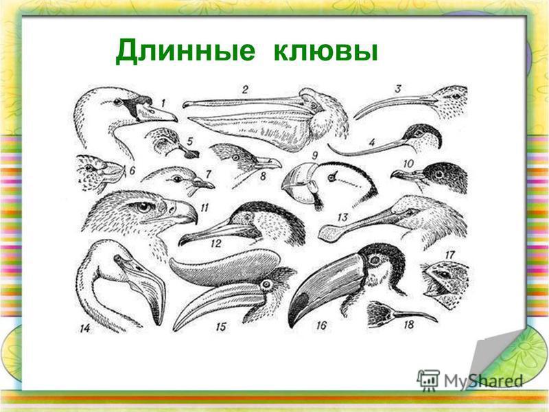 Длинные клювы