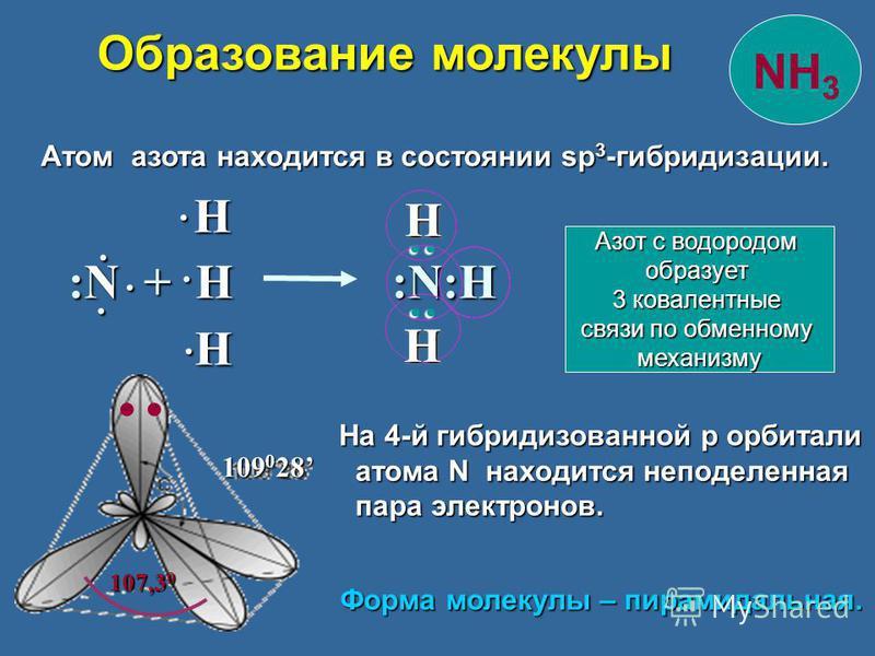 Атом азота находится в состоянии sp 3 -гибридизации. Атом азота находится в состоянии sp 3 -гибридизации. 109 0 28 :N + H :N:Н Н Н Н : : Н 107,3 0 На 4-й гибридизованной p орбитали атома N находится неподеленная атома N находится неподеленная пара эл