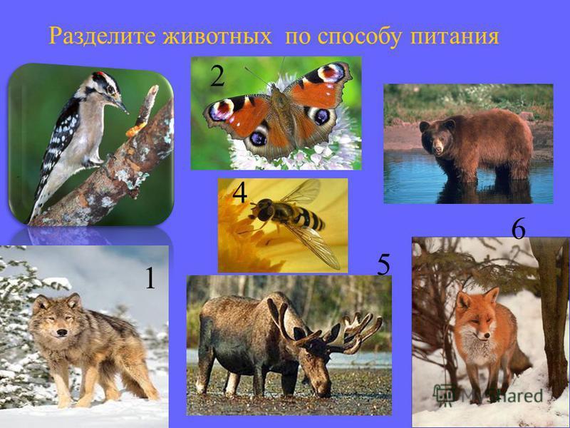 12 3 5 4 6 7 Какие из перечисленных животных занесены в Красную книгу Республики Беларусь?