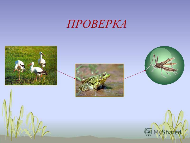 Какие из данных животных могут составить пищевую цепь? 1) белка 2) комар 3) лось 4) лягушка 5) олень 6) аист