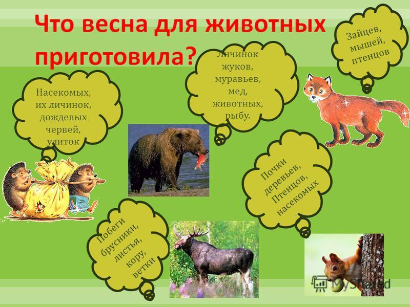 Зайцев, мышей, птенцов Побеги брусники, листья, кору, ветки Насекомых, их личинок, дождевых червей, улиток Личинок жуков, муравьев, мед, животных, рыбу. Почки деревьев, Птенцов, насекомых
