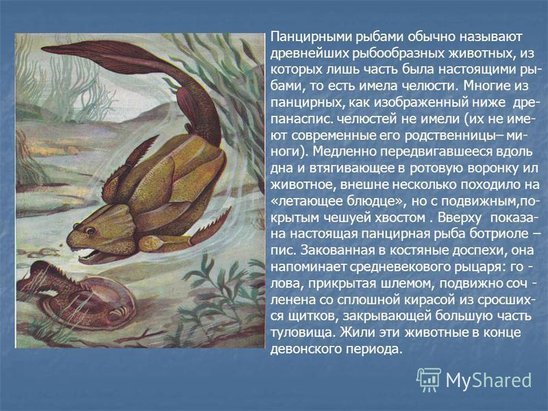 Панцирными рыбами обычно называют древнейших рыбообразных животных, из которых лишь часть была настоящими рыбами, то есть имела челюсти. Многие из панцирных, как изображенный ниже дре- панаспис. челюстей не имели (их не имеют современные его родствен