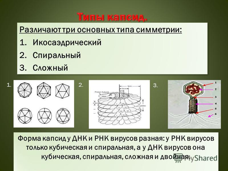 Различают три основных типа симметрии: 1. Икосаэдрический 2. Спиральный 3. Сложный Различают три основных типа симметрии: 1. Икосаэдрический 2. Спиральный 3. Сложный 1.2. 3. Форма капсид у ДНК и РНК вирусов разная: у РНК вирусов только кубическая и с