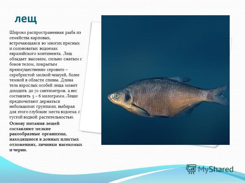 лещ Широко распространенная рыба из семейства карповых, встречающаяся во многих пресных и солоноватых водоемах евразийского континента. Лещ обладает высоким, сильно сжатым с боков телом, покрытым преимущественно серовато – серебристой мелкой чешуей,