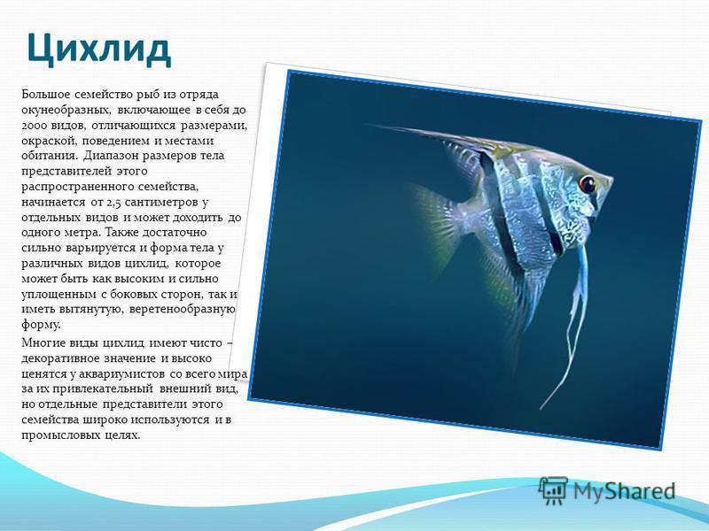 Цихлид Большое семейство рыб из отряда окунеобразных, включающее в себя до 2000 видов, отличающихся размерами, окраской, поведением и местами обитания. Диапазон размеров тела представителей этого распространенного семейства, начинается от 2,5 сантиме