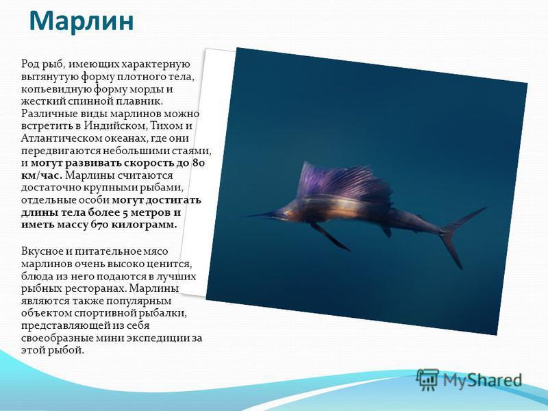 Марлин Род рыб, имеющих характерную вытянутую форму плотного тела, копьевидную форму морды и жесткий спинной плавник. Различные виды марлинов можно встретить в Индийском, Тихом и Атлантическом океанах, где они передвигаются небольшими стаями, и могут