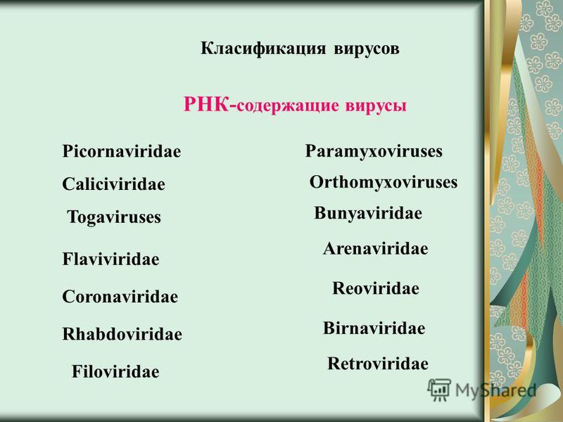 Класификация вирусов РНК- содержащие вирусы Picornaviridae Reoviridae Togaviruses Arenaviridae Coronaviridae Retroviridae Bunyaviridae Orthomyxoviruses Paramyxoviruses Rhabdoviridae Caliciviridae Flaviviridae Filoviridae Birnaviridae