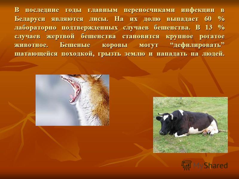 В последние годы главным переносчиками инфекции в Беларуси являются лисы. На их долю выпадает 60 % лабораторно подтвержденных случаев бешенства. В 13 % случаев жертвой бешенства становится крупное рогатое животное. Бешеные коровы могут дефилировать ш