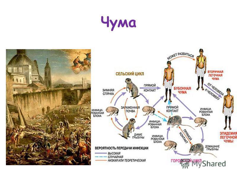 Реферат на тему чума в европе 7153