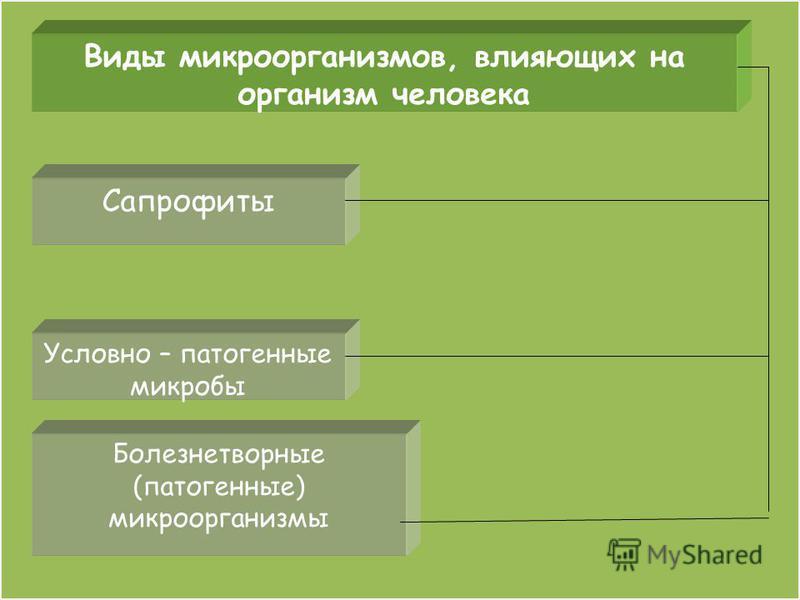 Виды микроорганизмов, влияющих на организм человека Сапрофиты Условно – патогенные микробы Болезнетворные (патогенные) микроорганизмы