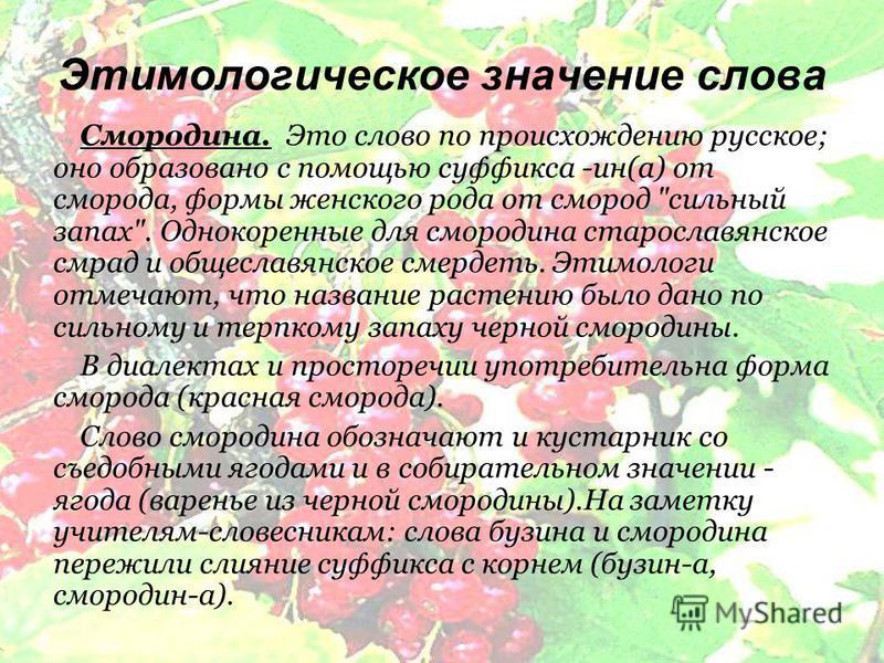 Этимологическое значение слова Смородина. Это слово по происхождению русское; оно образовано с помощью суффикса -ин(а) от сморода, формы женского рода от смород