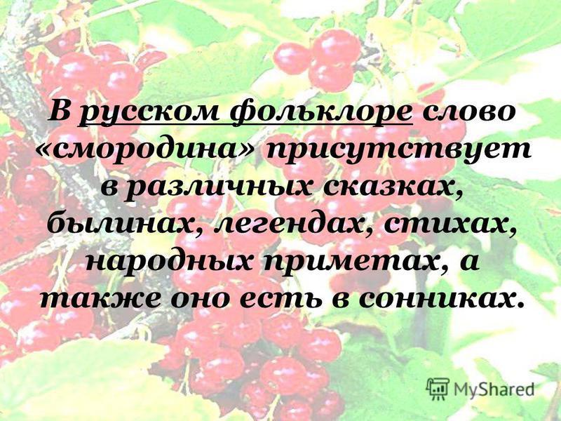 В русском фольклоре слово «смородина» присутствует в различных сказках, былинах, легендах, стихах, народных приметах, а также оно есть в сонниках.