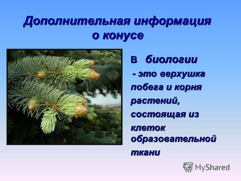 Дополнительная информация о конусе В биологии - это верхушка - это верхушка побега и корня растений, состоящая из клеток образовательной ткани