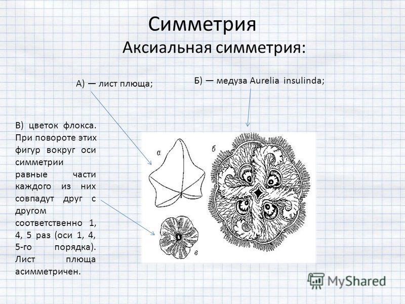 Симметрия Аксиальная симметрия: А) лист плюща; Б) медуза Aurelia insulinda; В) цветок флокса. При повороте этих фигур вокруг оси симметрии равные части каждого из них совпадут друг с другом соответственно 1, 4, 5 раз (оси 1, 4, 5-го порядка). Лист пл