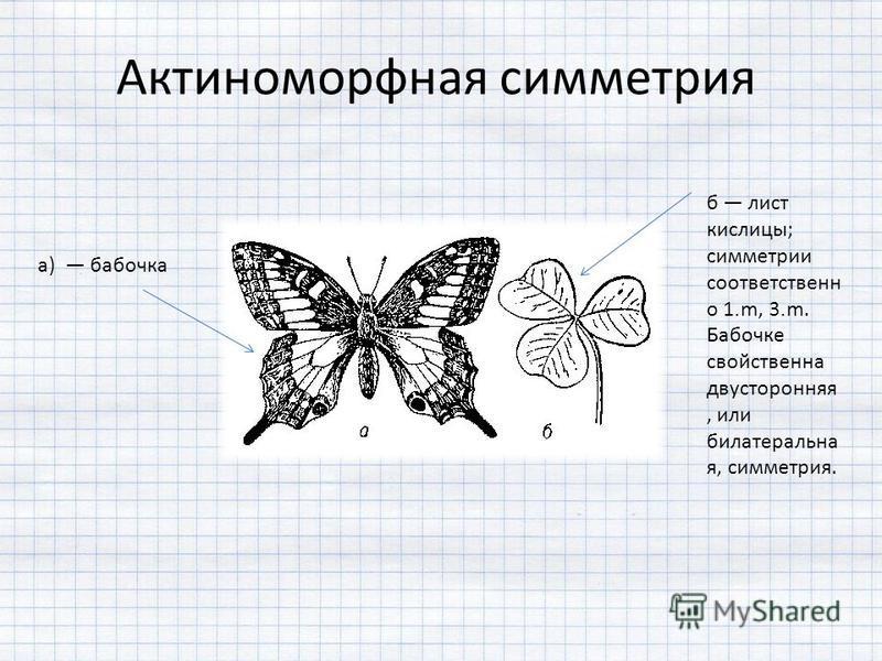 б лист кислицы; симметрии соответственно 1 m, 3 m. Бабочке свойственна двусторонняя, или билатеральна я, симметрия. Актиноморфная симметрия а) бабочка