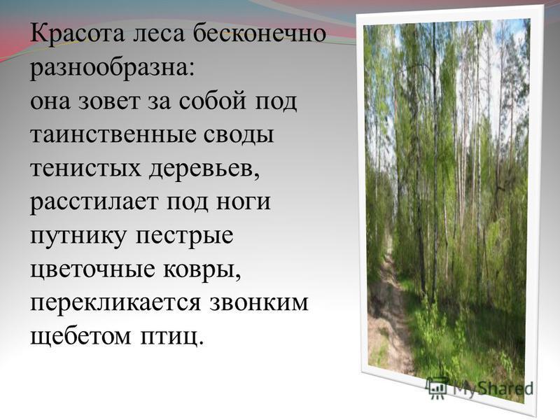 Красота леса бесконечно разнообразна: она зовет за собой под таинственные своды тенистых деревьев, расстилает под ноги путнику пестрые цветочные ковры, перекликается звонким щебетом птиц.